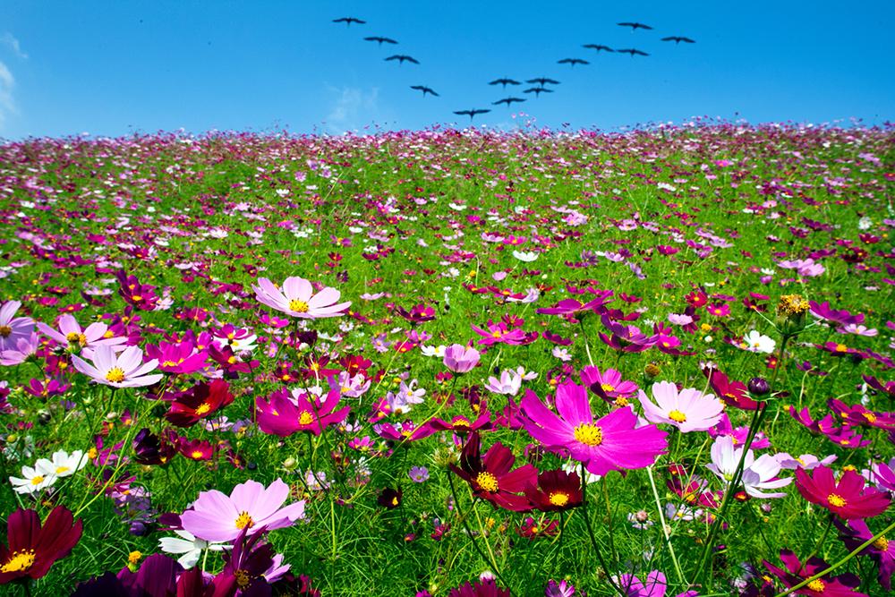 鳥もてなむ生駒高原
