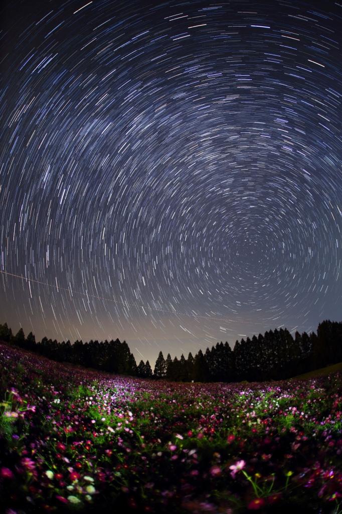花と星の郷